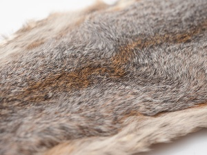 Whole Squirrel Skin - grey
